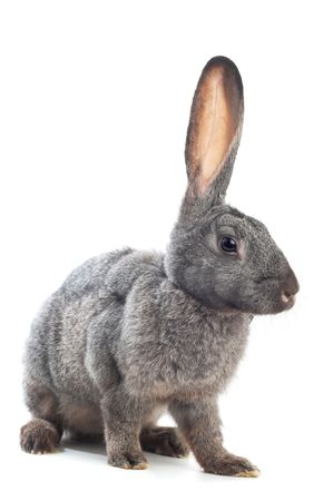portrait of bunny over white Stock Photo