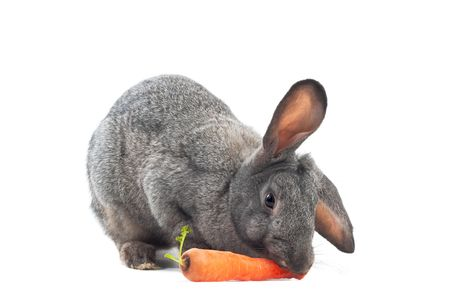 image of rabbit is eating carrot over white photo