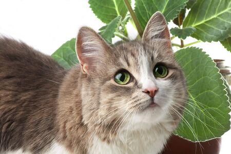 kitty isolated on white; window plant on background photo