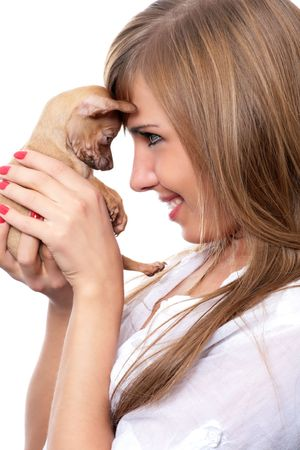toy terrier puppy on hand of young woman isolated on white photo