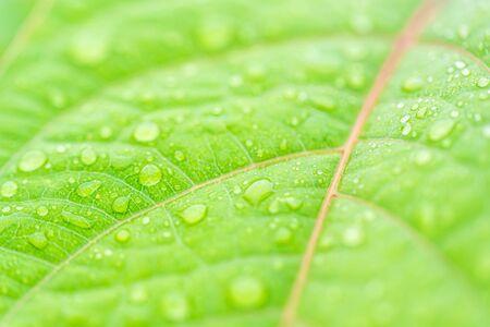 Leaf Macro Photography Stok Fotoğraf