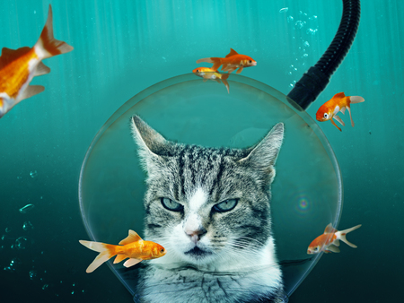 Cat makes a diving training to look for fish