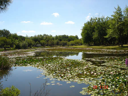 lac: lillypads at lac du Hourtin