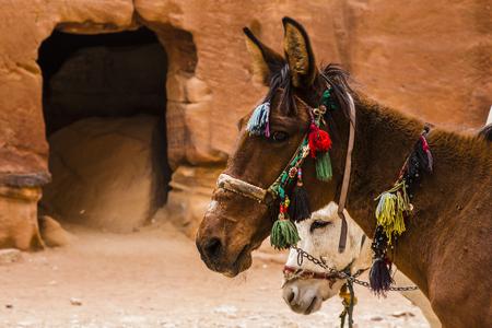gypsy: Gypsy Horse
