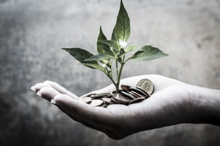 abundance money: Seedlings of riches over white background Stock Photo