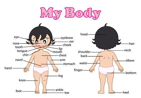 illustratie van geïsoleerde woordenschat deel van het lichaam op wit Stock Illustratie