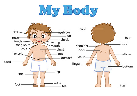 illustration of isolated vocabulary part of body on white  イラスト・ベクター素材