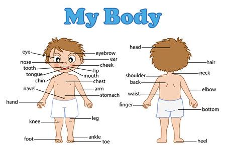 illustration of isolated vocabulary part of body on white Stock Illustratie