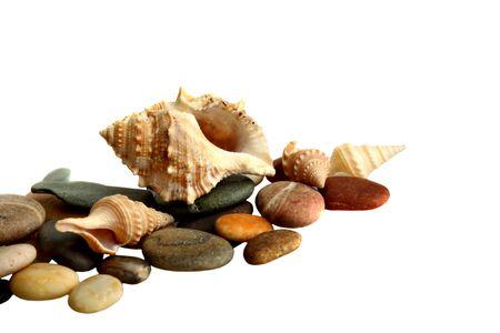 lovely seashells against white background photo
