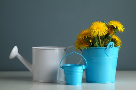 Dandelion in the children a bucket and watering can photo