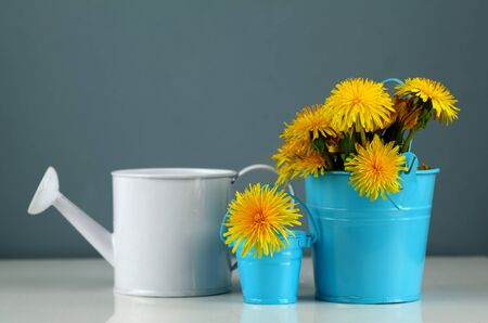 Dandelion in the children a bucket and watering can