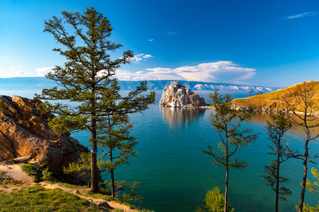 Buddhist pine on rock background Shaman