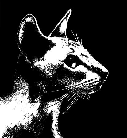 Profile of cat. Illustration