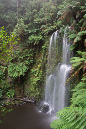 Dramatic Beauchamp waterfall in the lush otways national park along the great ocean road in Australia. Waterfall is surrounded by lush ferns and trees with mornign fog in the air