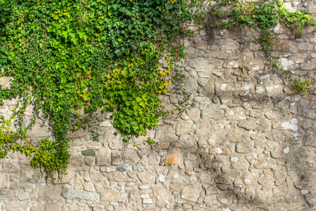 Textured old stone wall half covered with bright green leafy plants Imagens