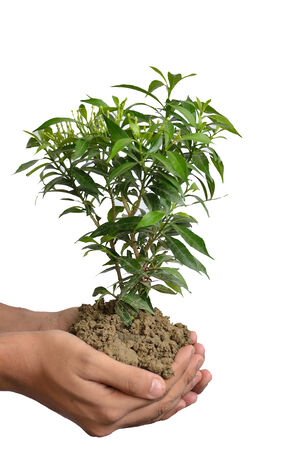 represent: Human hand holding green tree with soil represent savings
