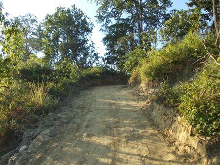 upward: Upward road Through forest
