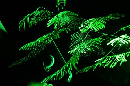 fluorescent light: Low angle fluorescent light in a park Stock Photo