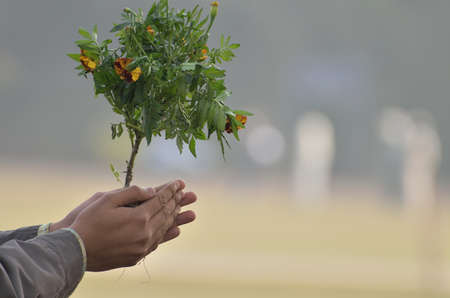 Human hands holding and caring a young green plant. photo