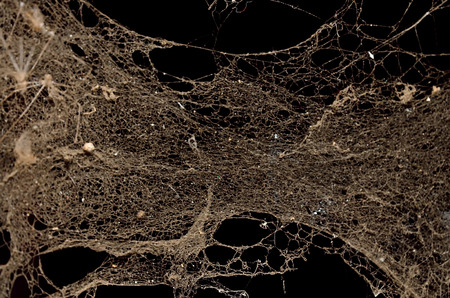 entangled: Dust illuminated on dark background Stock Photo