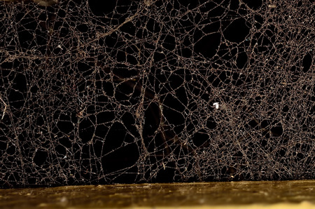 Dust illuminated on dark background Reklamní fotografie