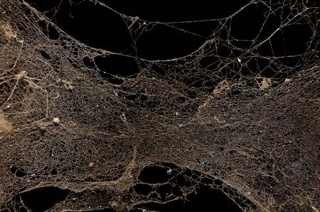 illuminated: Dust illuminated on dark background Stock Photo