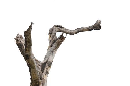Dode boom op een witte achtergrond Stockfoto