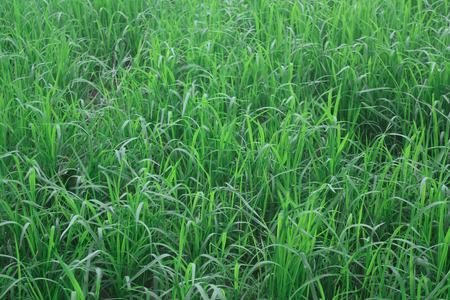 level playing field: Green grass field, Stock Photo