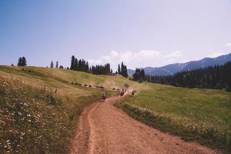 grasslands: Nalati grasslands road Stock Photo