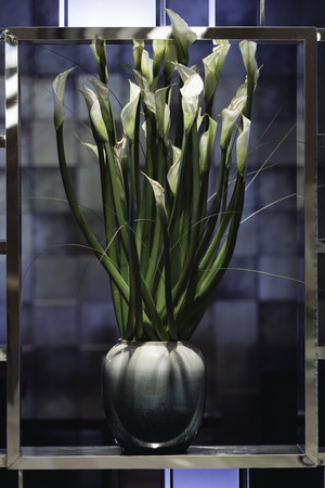 Potted calla lily 스톡 콘텐츠