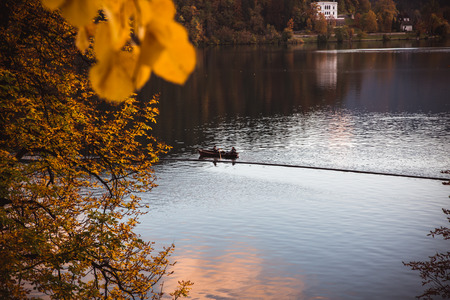 Yellow leafs autumn at bled lake in Slovenia with a view to island. Sloveniya, Europe