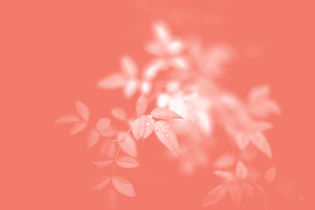Color of the year 2019 Living Coral. Floral natural pattern of foliage. Popular trend palette for design illustrations, fabrics, fashion, images. Tinted background Stock fotó