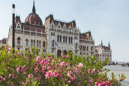 Spring flower with View of the Parliament Hungary ,Budapest in sun day