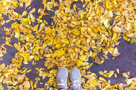 Grey shoes in the autumn leaves. Top view. Banque d'images - 132220544