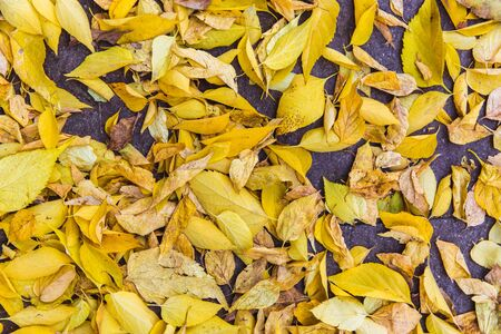 Colorful autumn leaves on the Ground Fallen Banque d'images - 132225950