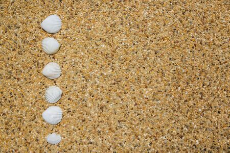 Sea shells on background of small pebbles. Summer concept. Flat lay Banque d'images - 132489184