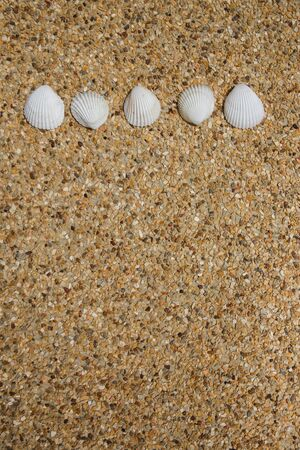 Sea shells on background of small pebbles. Summer concept. Flat lay Banque d'images - 132484589