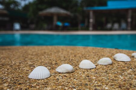 Sea shells on background of small pebbles Banque d'images - 132508755