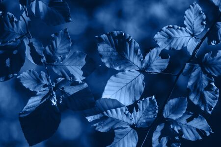 Background with blue leaves and bright sun with bokeh effect