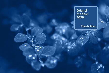 Background with blue wet leaves and bright sun with bokeh effect. Color 2020 trendtext