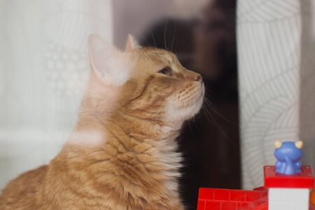 Red cat at home on the window, behind the glass Banco de Imagens
