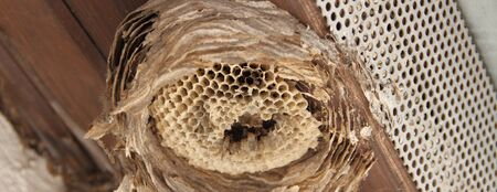 An old wasp nest under a house roof