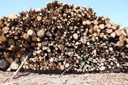 Old tree trunks for firewood