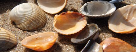 Different seashell lie on the sandy beach