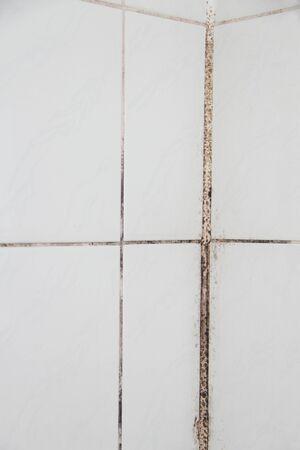Old moldy tiles in the bathroom