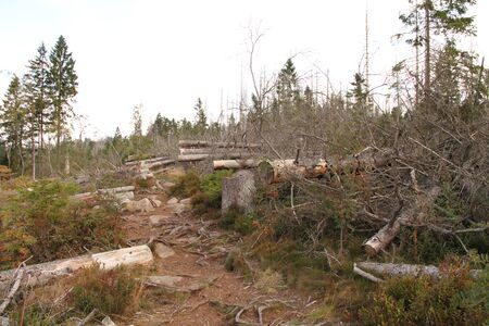 Forest dying on the Brocken in the Harz Germany