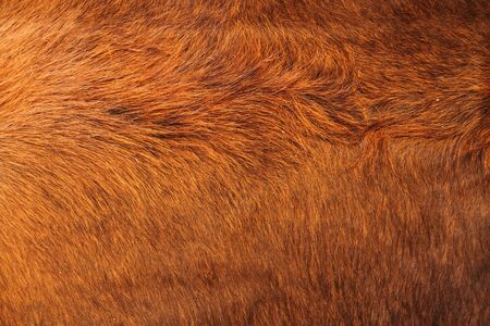 A brown cowhide