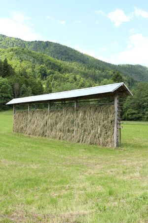 Hay is hung up to dry Stock Photo