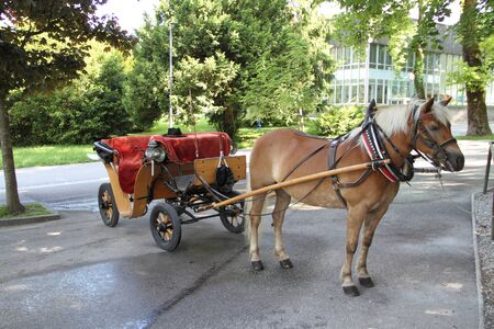 A horse with a carriage
