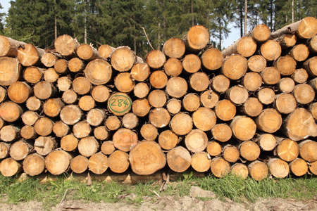 a freshly felled wooden pile in the forest